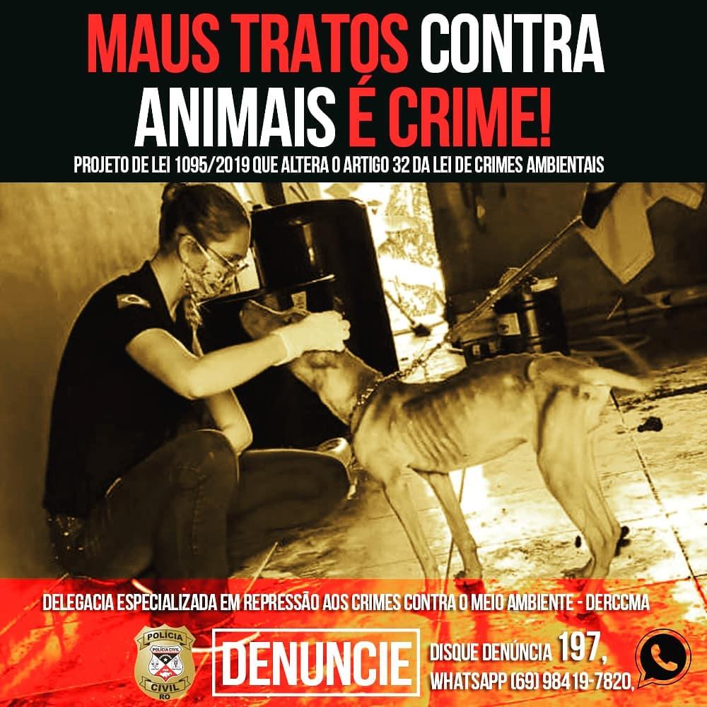 Abuso e maus tratos a animais tem pena de reclusão aumentada